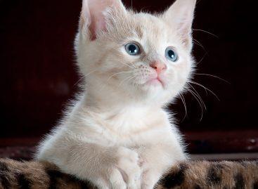 Como escolher o nome de um animal de estimação